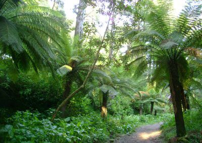 Fern-Valley-at-Buçaco-Forest